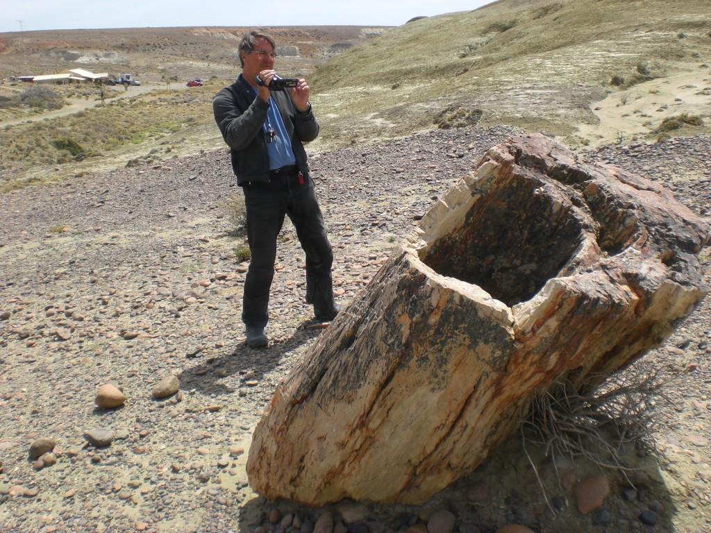 versteinerter Baumstumpf