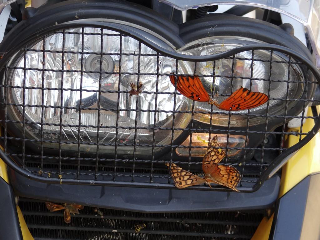 Wildlife eingefangen auf der Interstate