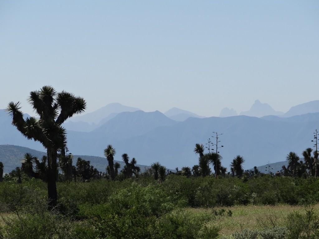 In der Ferne erscheinen die Ausläufer der Sierra Madre Oriental