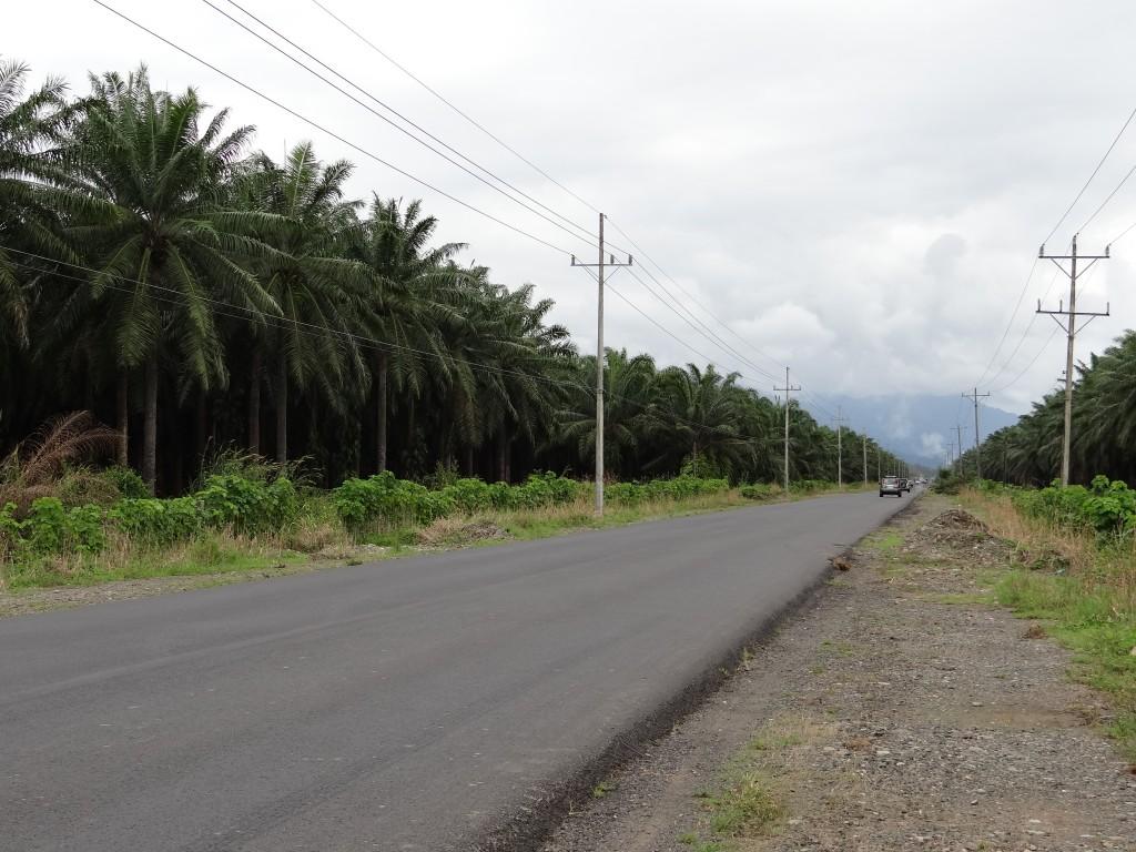 Palmen-Plantagen