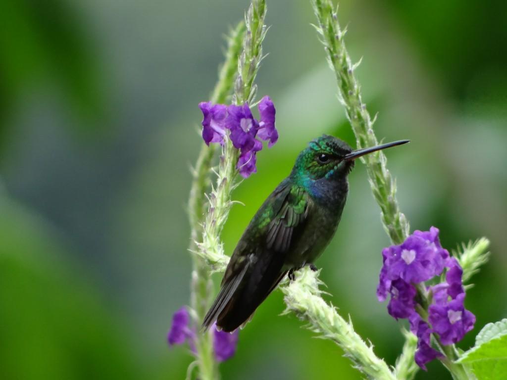 "mein ""Haus-Kolibri"""