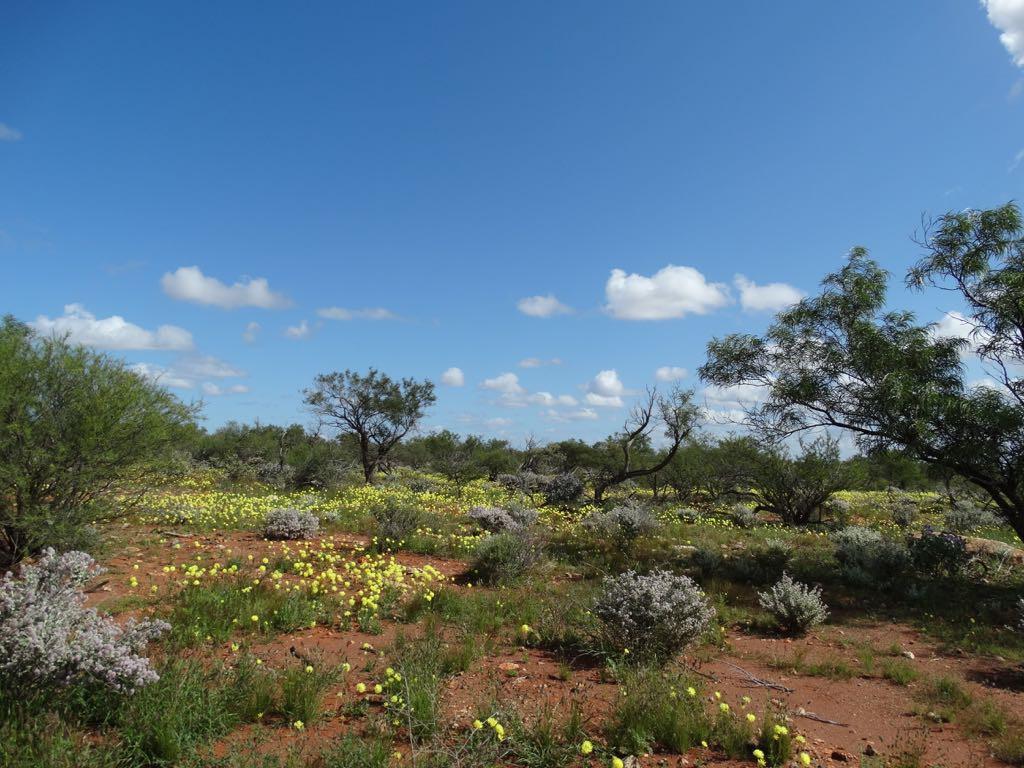 Zeichen beginnenden Frühlings im Busch