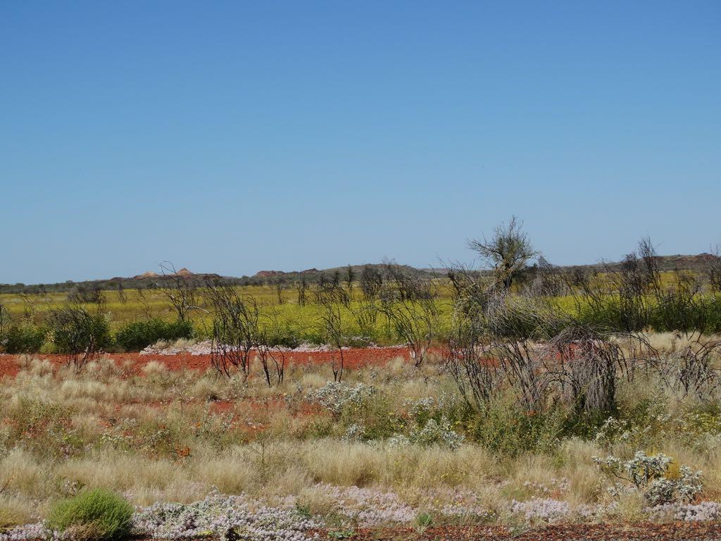 Buschland
