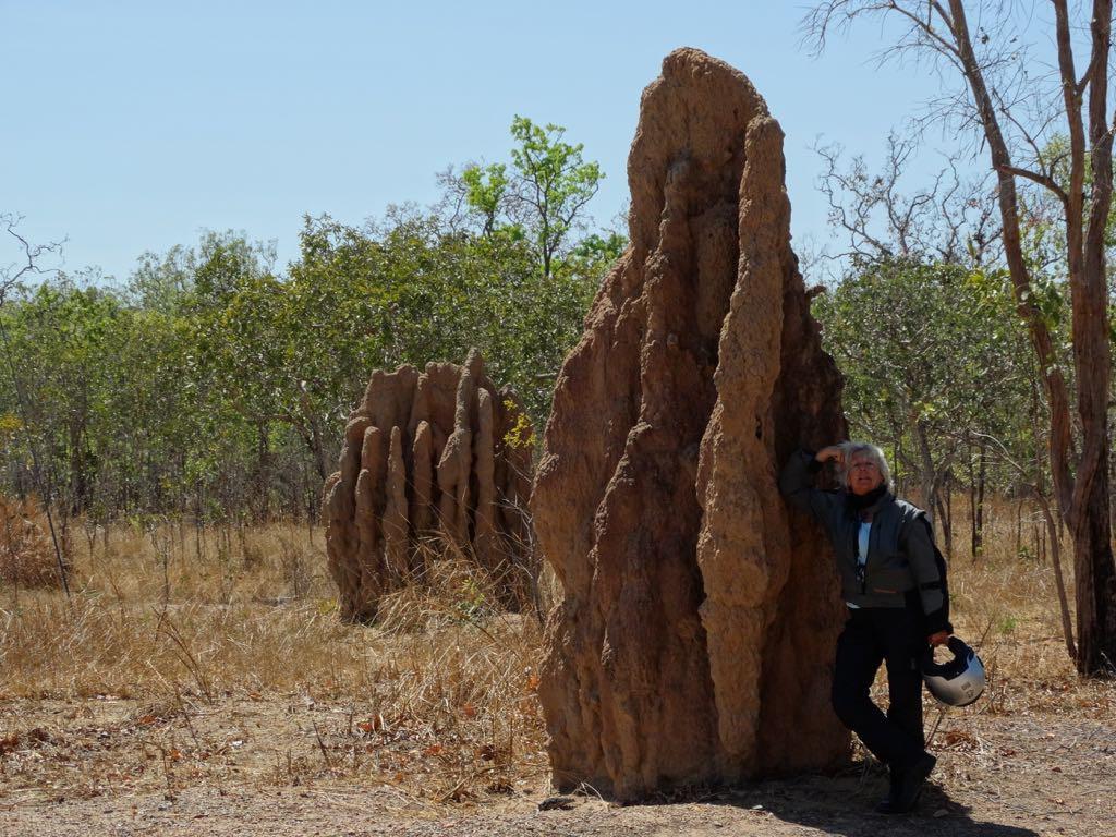 über 4 m hoher Termitenbau