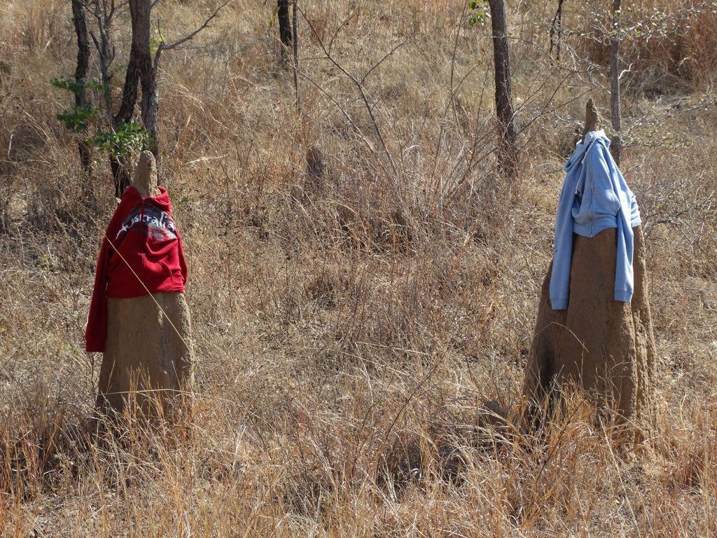 gegen die Langeweile: massenhaft verkleidete Termitenbauten