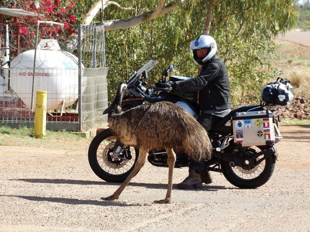 Begegnung mit Emu an einer Tankstelle