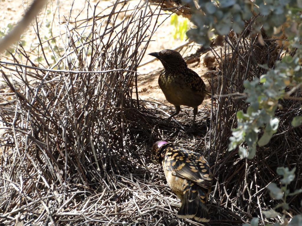 kritisch begutachtet sie Nest und Präsent