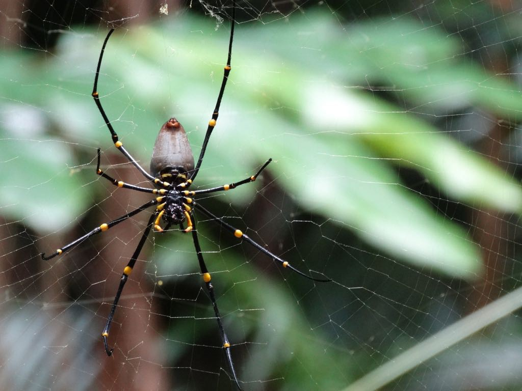 große Spinne auf Beute wartend, wahrscheinlich auch sehr gefährlich wie Alles in Australien!