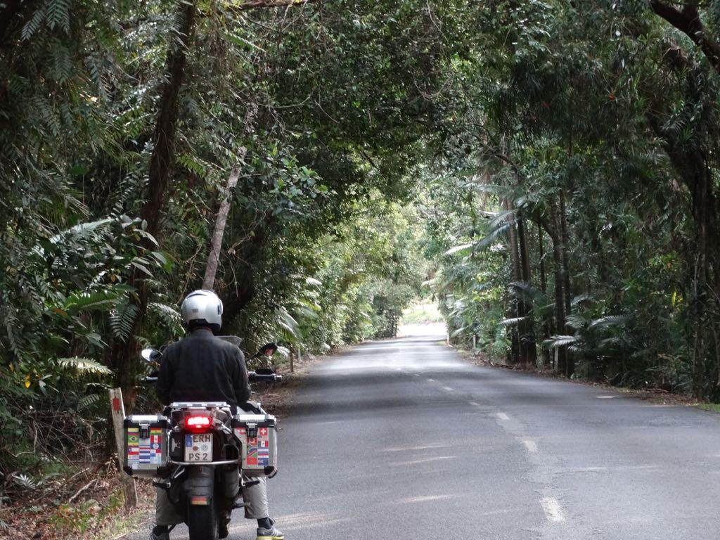 durch dichten Regenwald zum Cape Tribulation